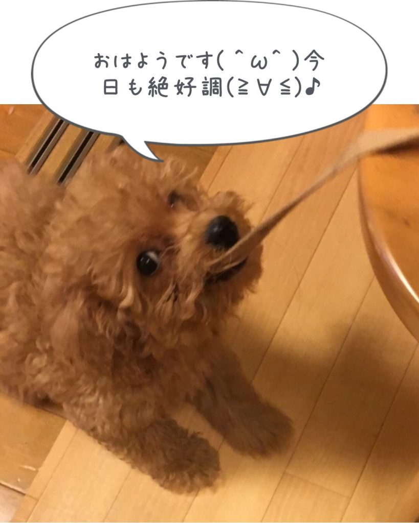 yuzu5